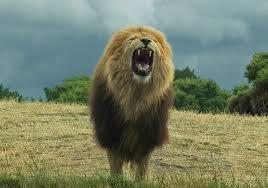 roaring lion1