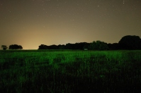 field-at-night